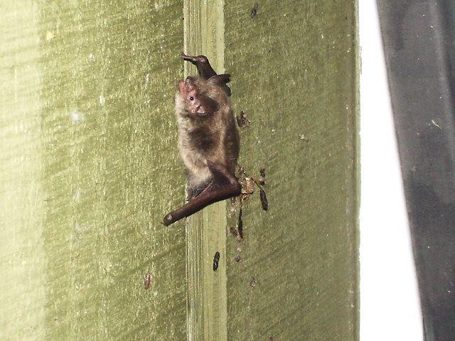 A Bat on a wall